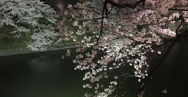 夜桜と香り